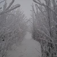 Mlhavá cesta na Lysou horu