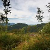 Cestou na Filipku - pohled na Gruň