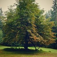 Palouk v pralese