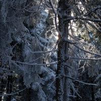 Les pod vrcholem Smrku