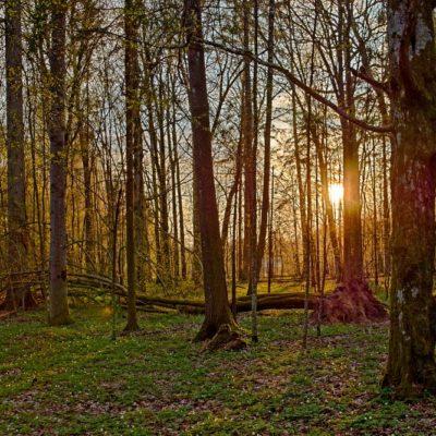 """Výprava """"Bialowiežský prales 2019"""", II. část"""