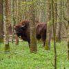 """Výprava """"Bialowiežský prales 2019"""", závěr"""