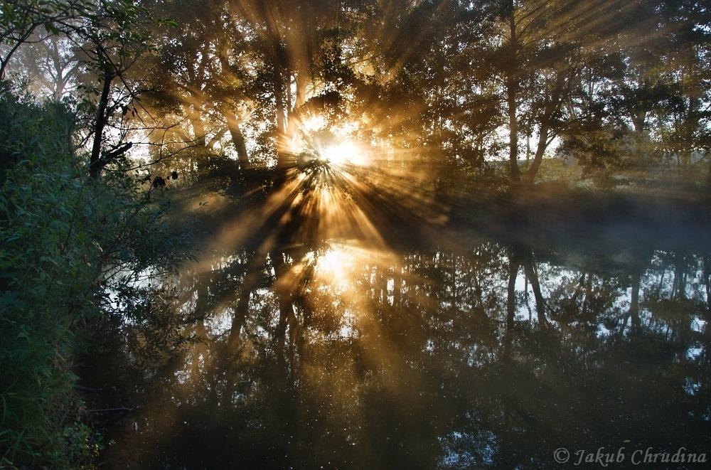 Kouzelné ráno u rybníka